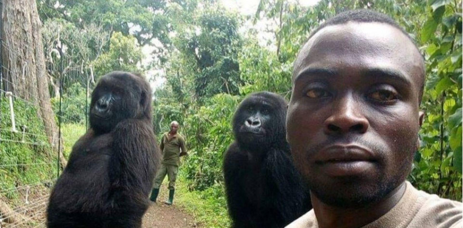 La verdadera historia de la selfie con los gorilas que se volvió viral
