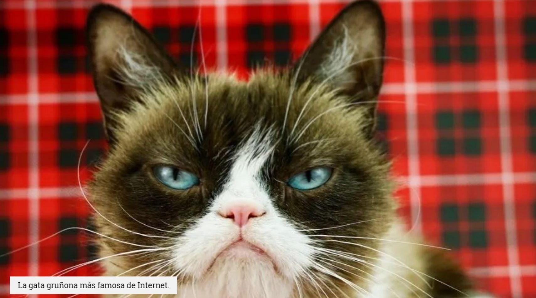 Tristeza mundial: murió la gatita más famosa de Internet