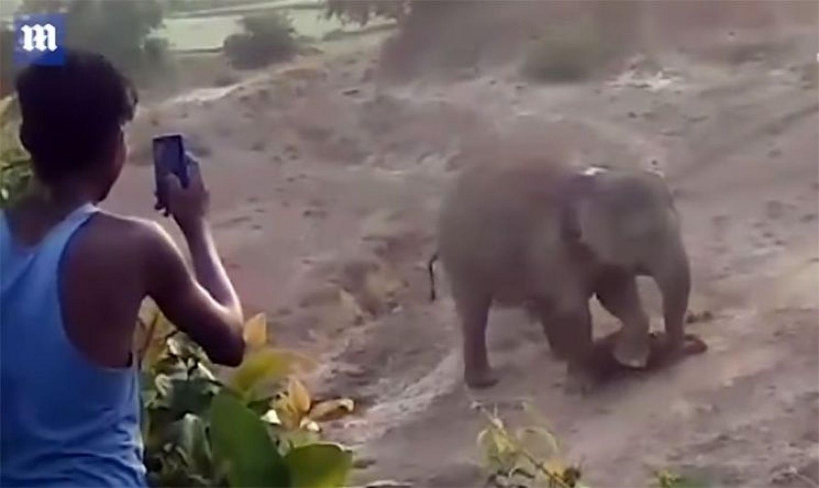 Elefanta furiosa mató a un hombre que fotografiaba a su cría muerta