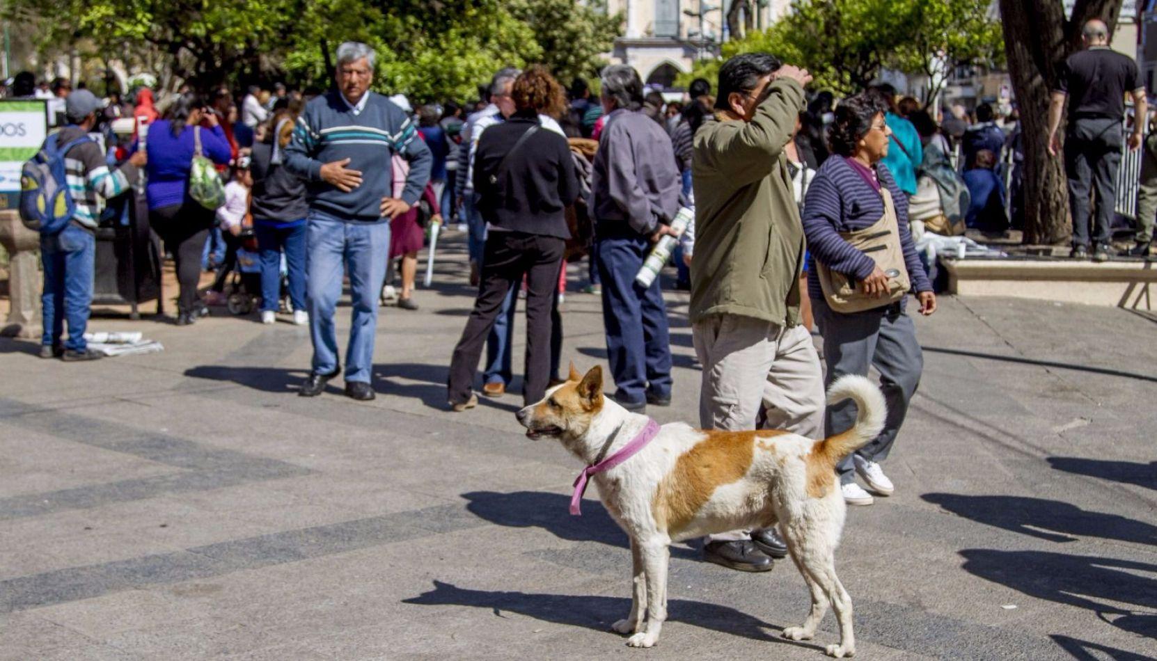Milagro en Salta: Perros peregrinos serán identificados con cintas de colores
