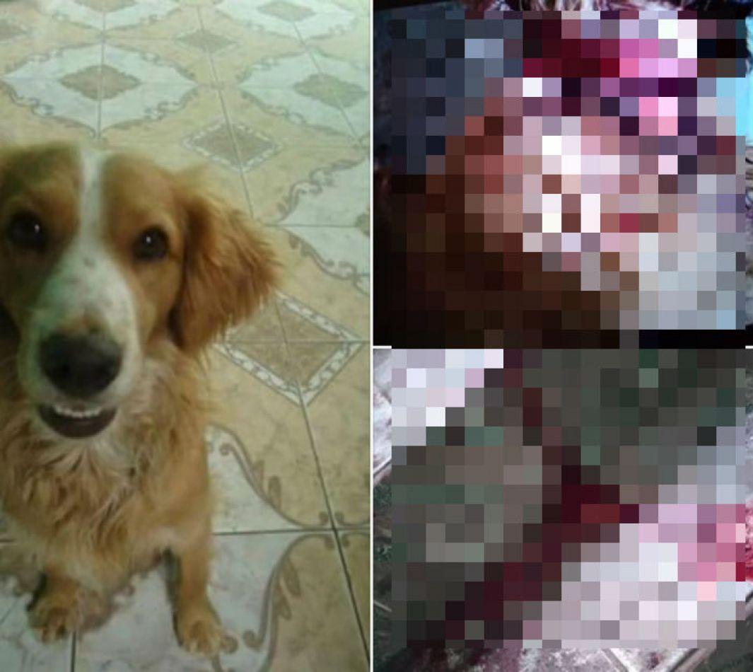 Empleado municipal salteño cortó entero a un perrito hasta matarlo