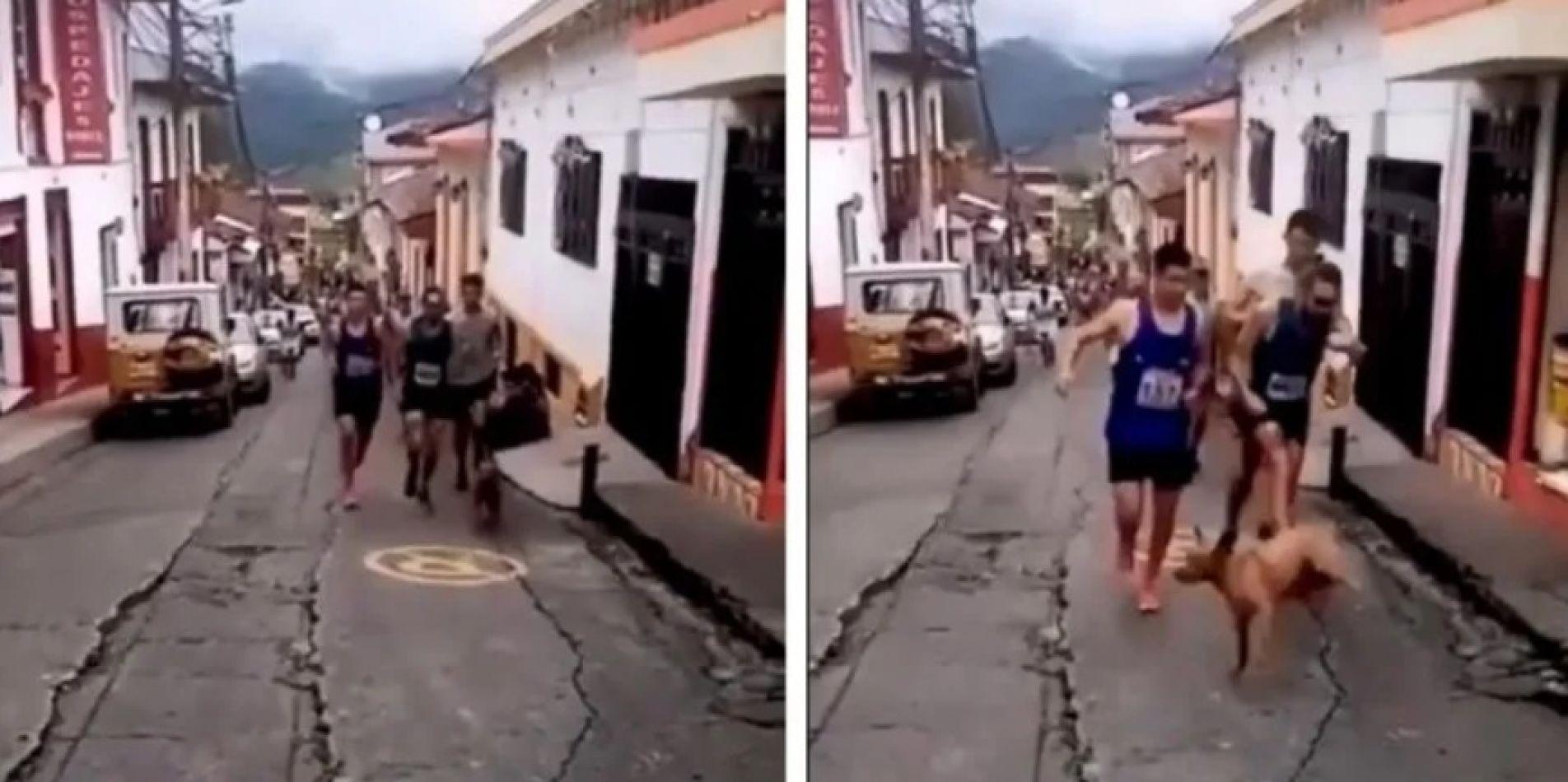 Video indignante: atleta desalmado voló de una patada a un perro en plena competencia