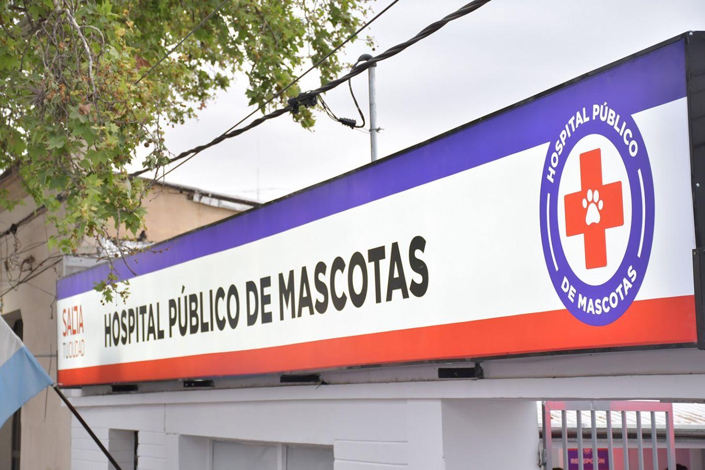 Fumigación en el Hospital Municipal de Salud Animal