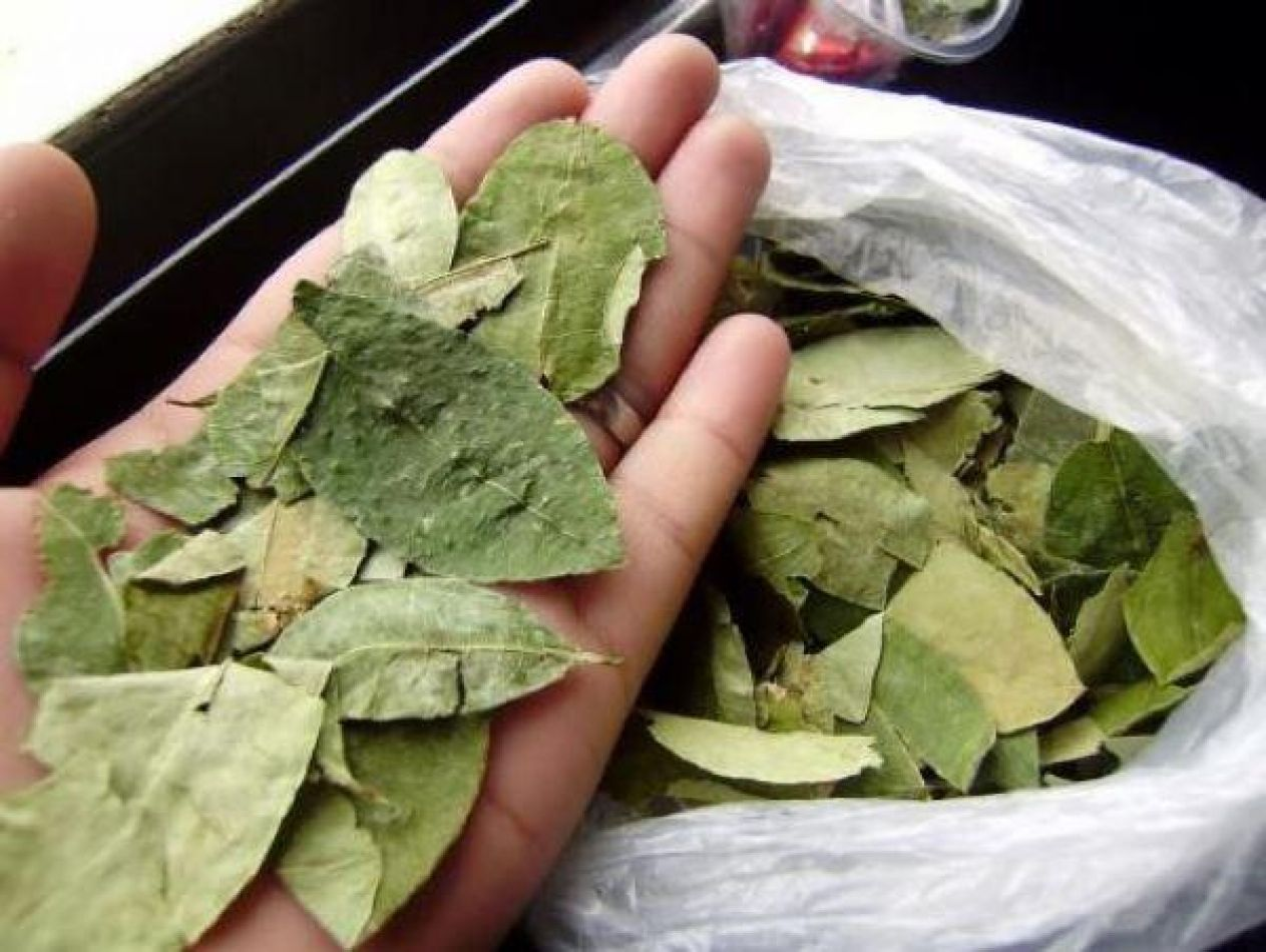 Jujuy a fondo por la coca: Distribución gratis, ingreso legal y comercio minorista