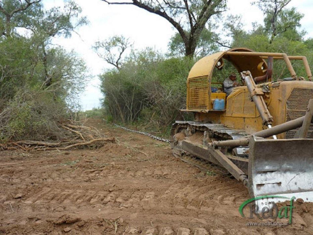 En 20 años, se perdieron 6,5 millones de hectáreas de bosque nativos en el país