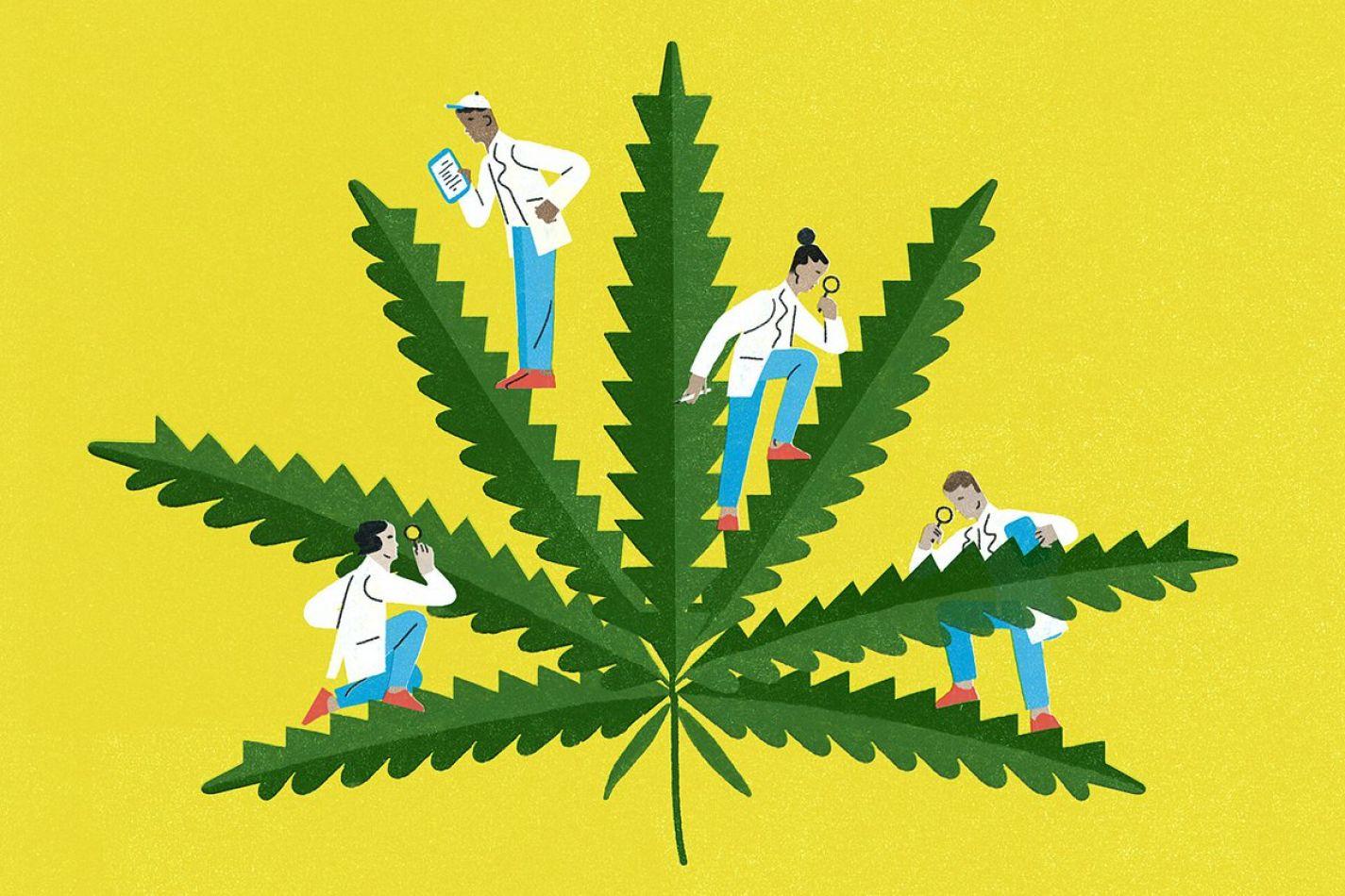 Cuáles son los efectos adversos de consumir cannabis durante el embarazo y la lactancia, según la Sociedad Argentina de Pediatría