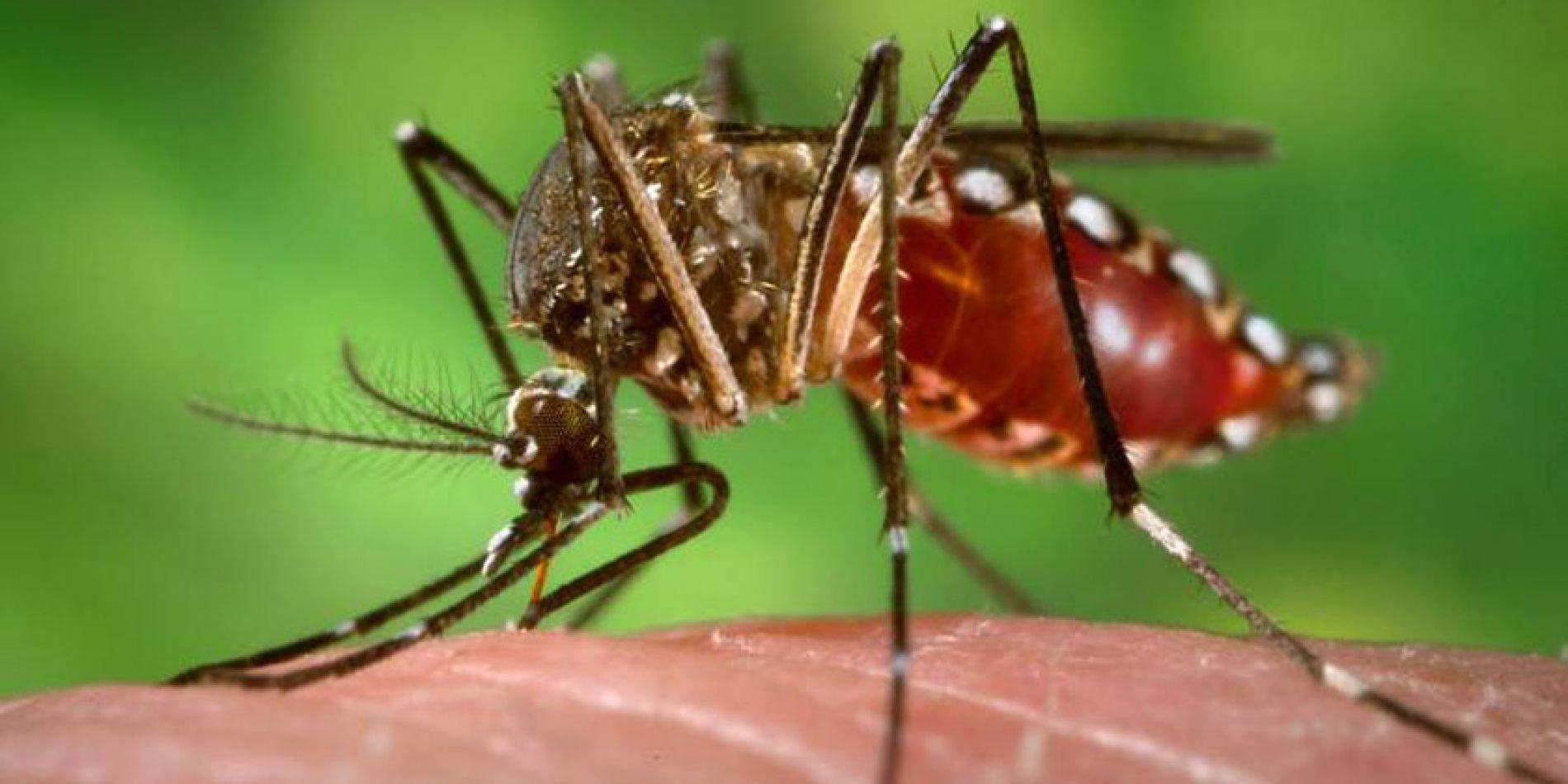 Dengue en Salta: Confirmaron 59 casos de la enfermedad